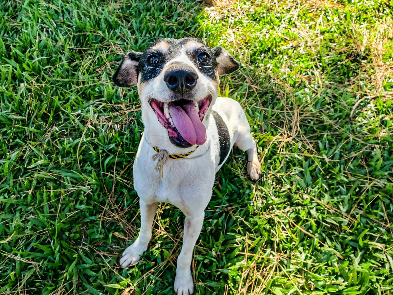 doação cães cachorros